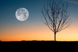 moon-viewing